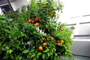 Moroccan Oranges