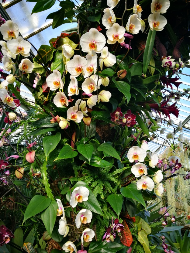 Cream and yellow orchids with some burgundy ones in background. They're formed into an arch which you walk under.