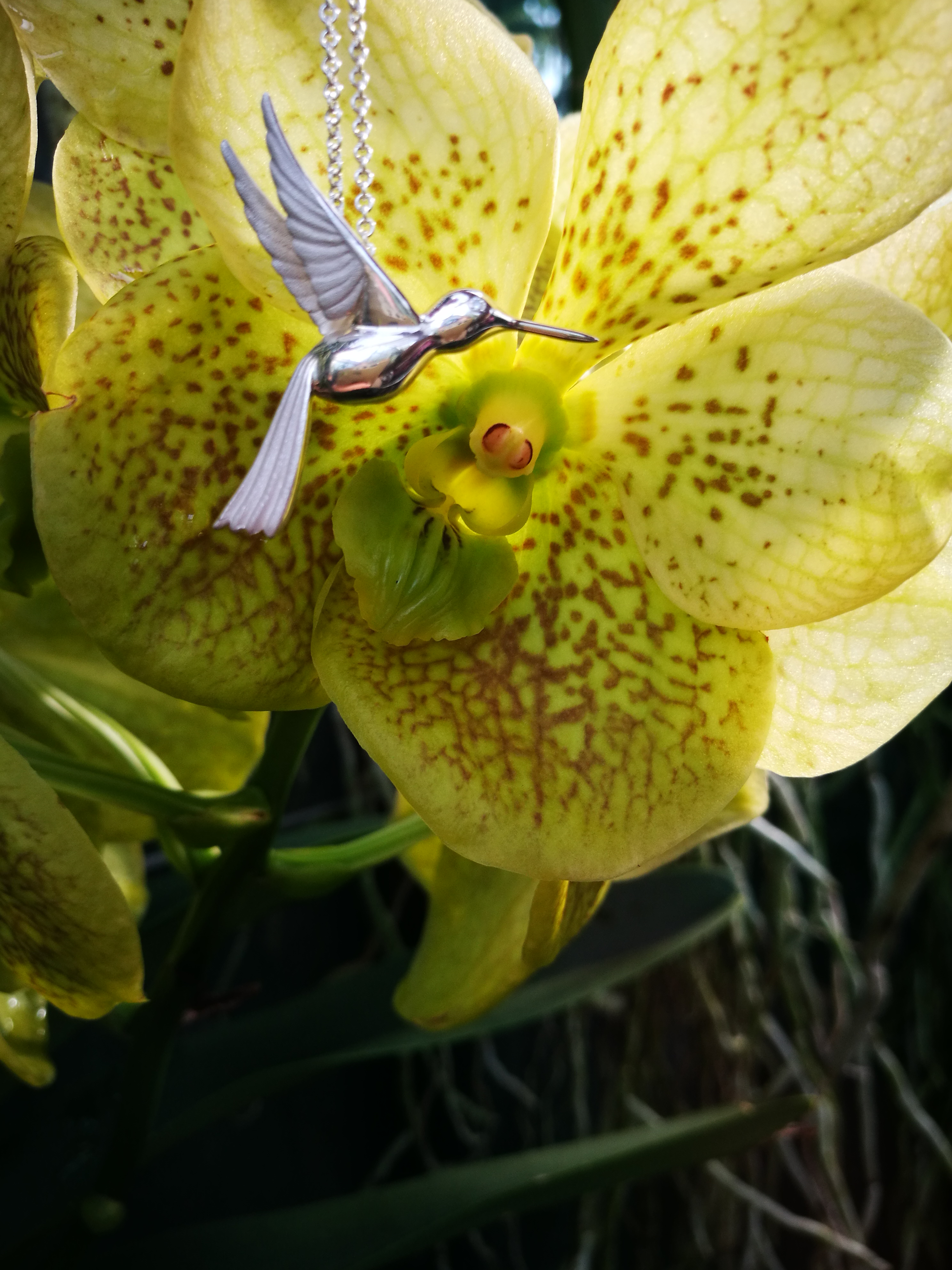 Green orchid with silver hummingbird pendant in foreground.