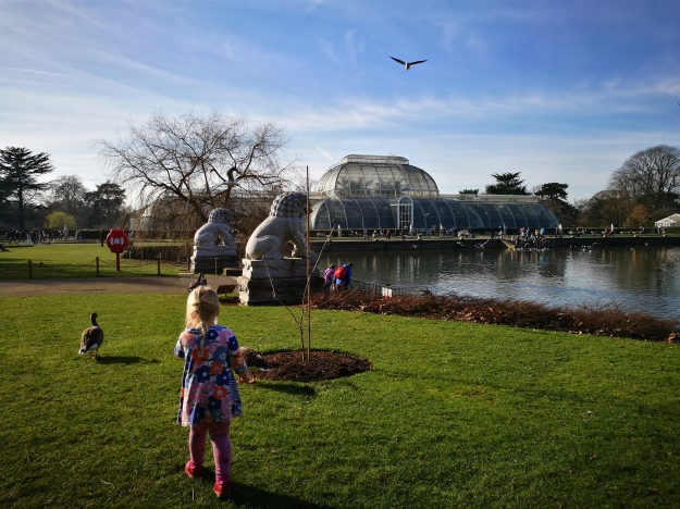 My daughter (4 years old) walking on the lawn by the lake towards the Palm House.
