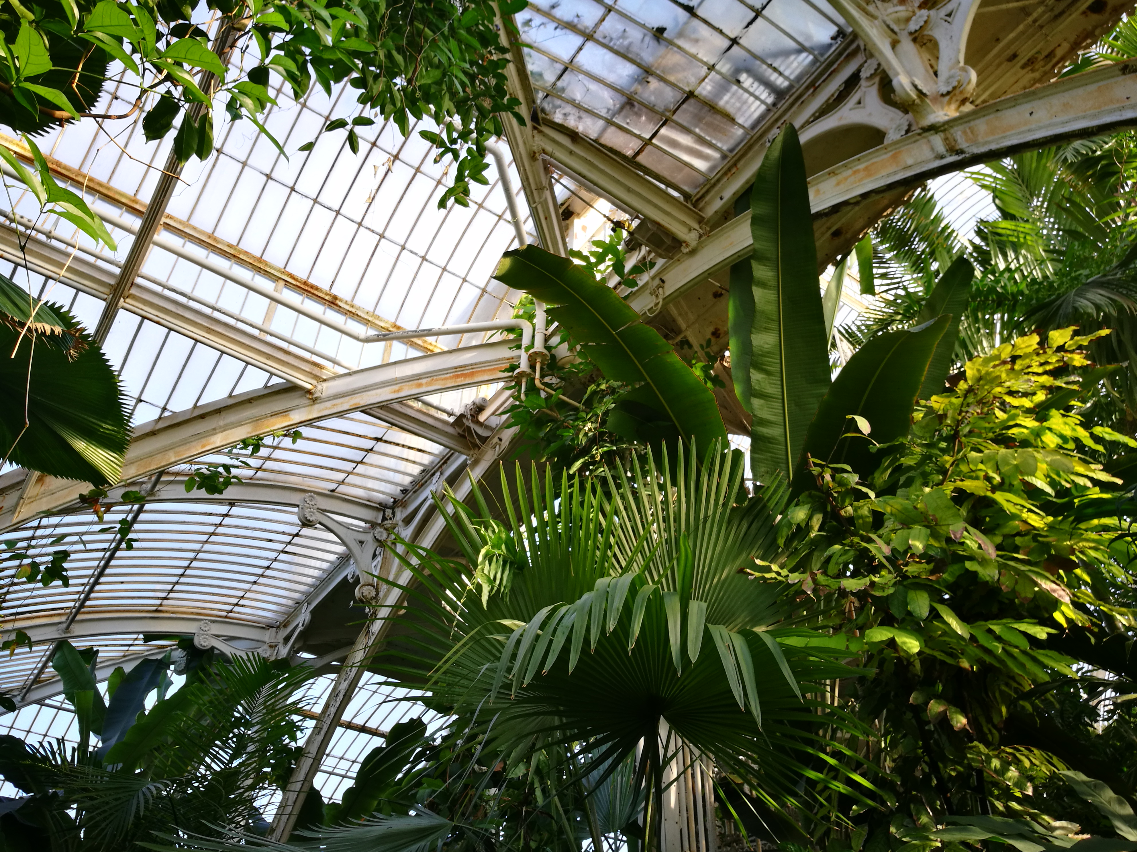 Interior of the palm house, looking upwards.
