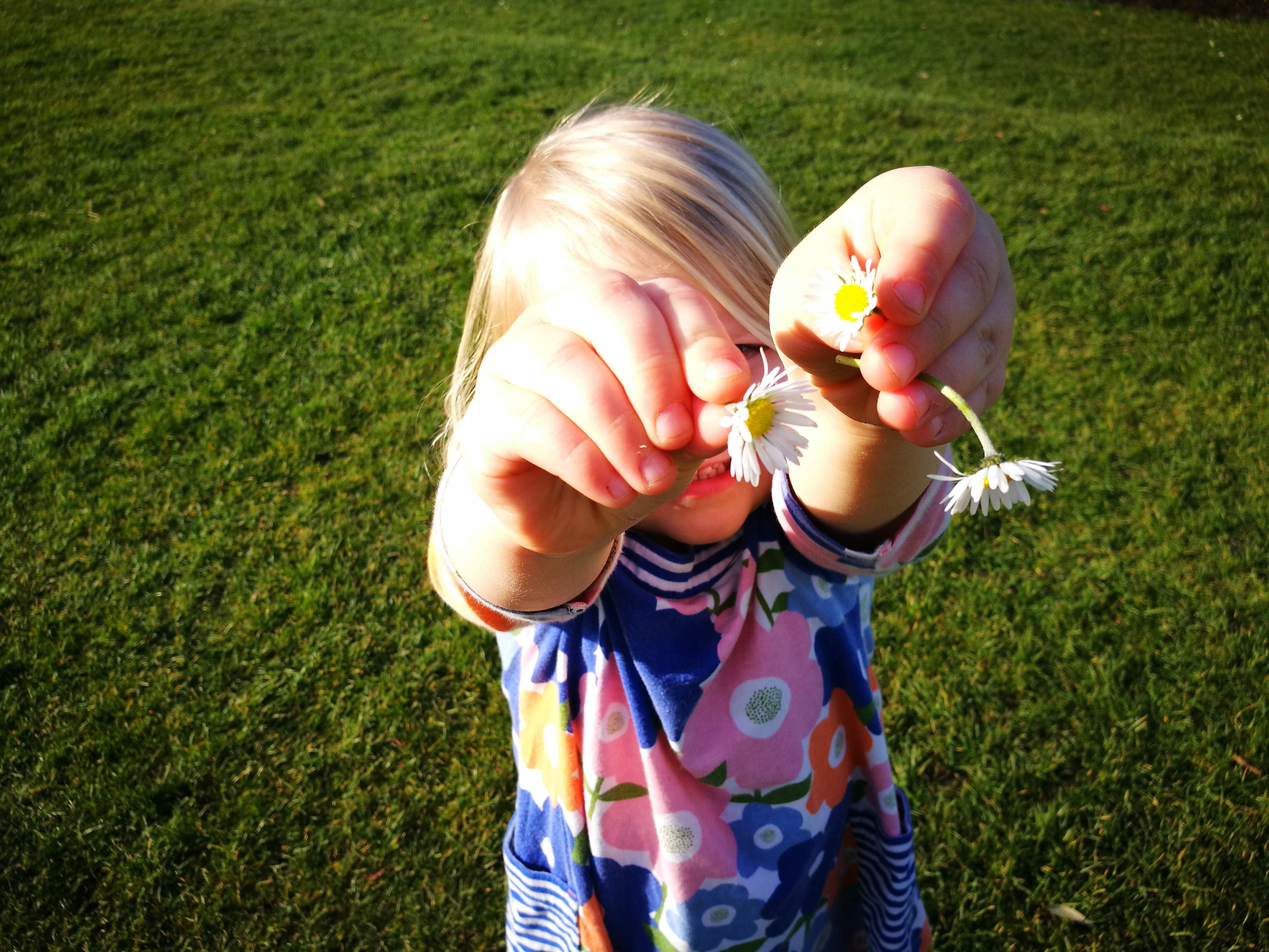 My daughter thrusting a handful of illicit daisies into my face.
